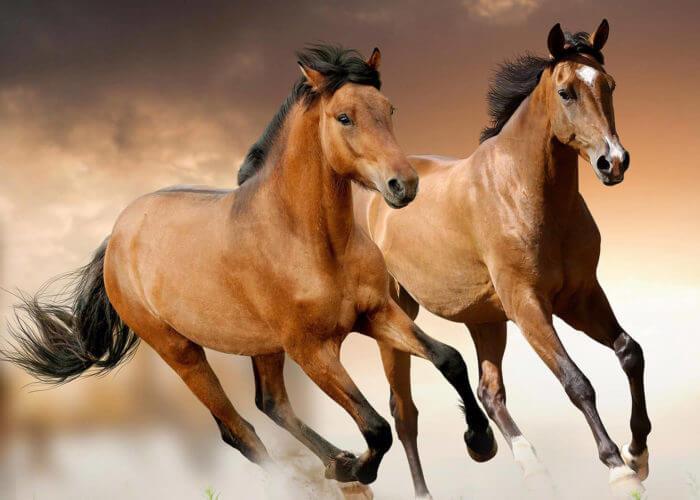 horses_cut